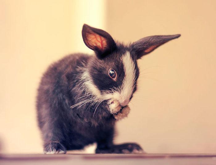 foto-coniglietti-cuccioli-ashraful-arefin-05