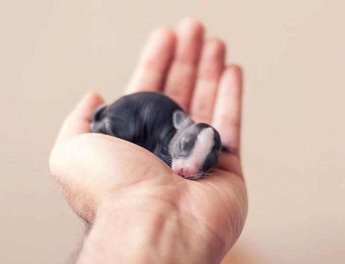 foto-coniglietti-cuccioli-ashraful-arefin-06