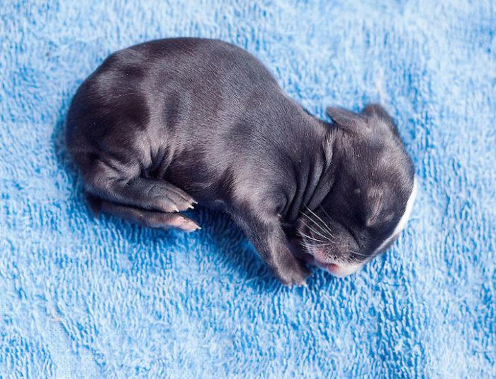foto-coniglietti-cuccioli-ashraful-arefin-08