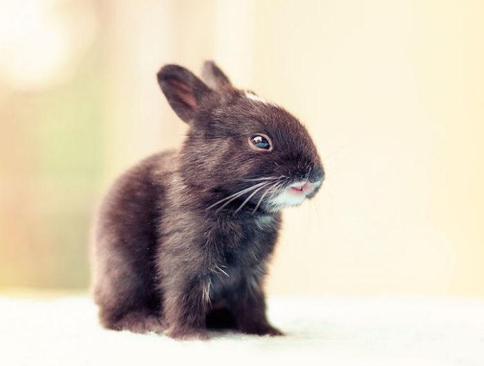 foto-coniglietti-cuccioli-ashraful-arefin-11