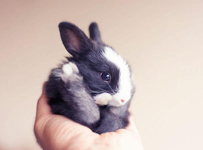 foto-coniglietti-cuccioli-ashraful-arefin-12