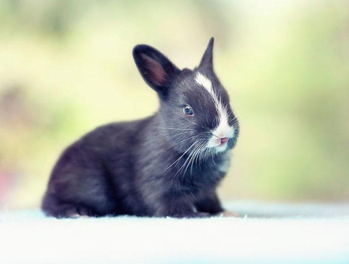 foto-coniglietti-cuccioli-ashraful-arefin-13