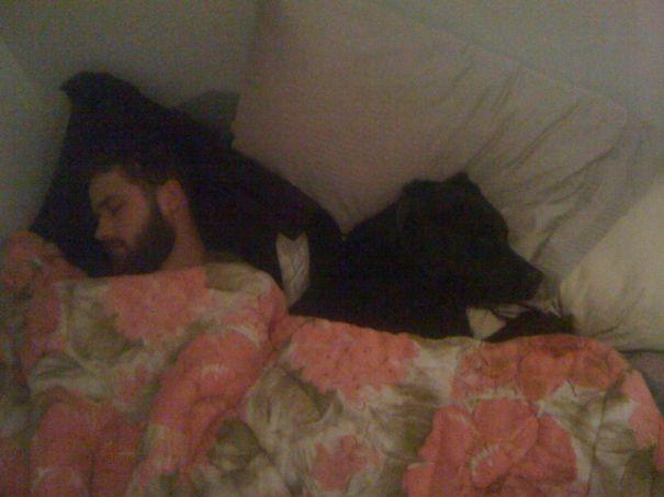 foto-di-cani-che-dormono-nel-letto-dei-padroni-02