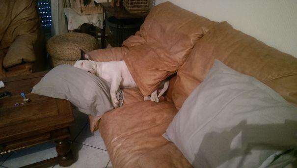 foto-di-cani-che-dormono-nel-letto-dei-padroni-03