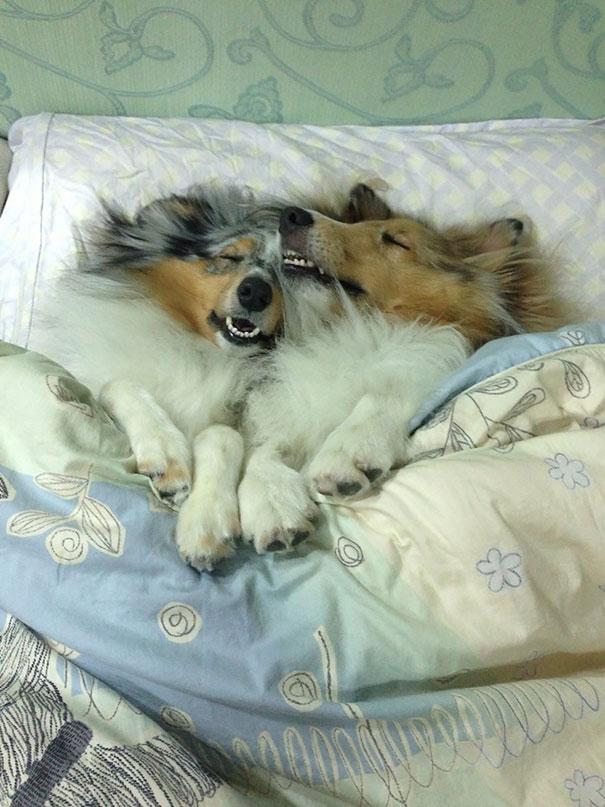 foto-di-cani-che-dormono-nel-letto-dei-padroni-05