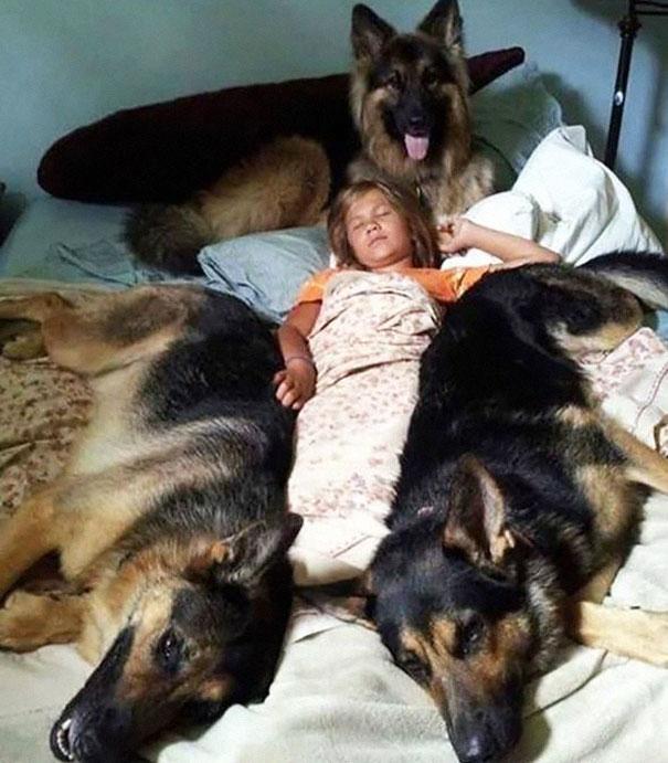 foto-di-cani-che-dormono-nel-letto-dei-padroni-06