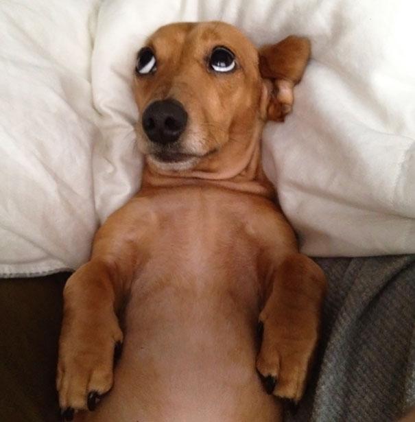 foto-di-cani-che-dormono-nel-letto-dei-padroni-07