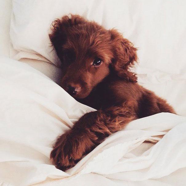 Foto di cani che dormono nel letto dei padroni 09 keblog - Sognare cacca nel letto ...