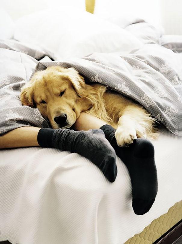 foto-di-cani-che-dormono-nel-letto-dei-padroni-10