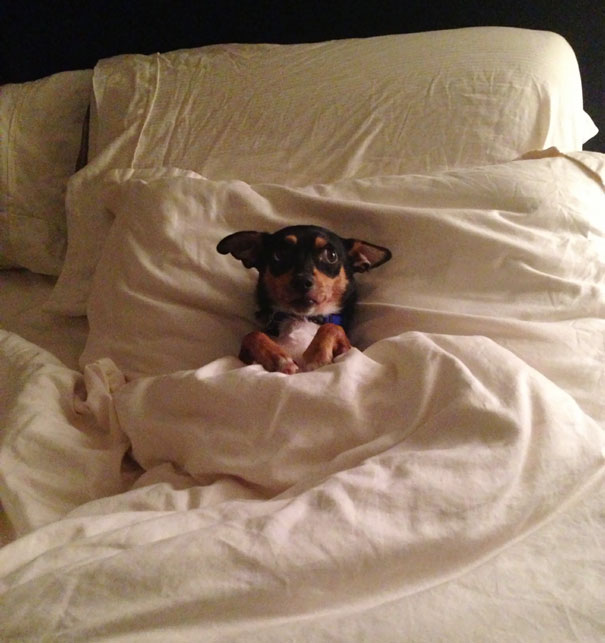 foto-di-cani-che-dormono-nel-letto-dei-padroni-14
