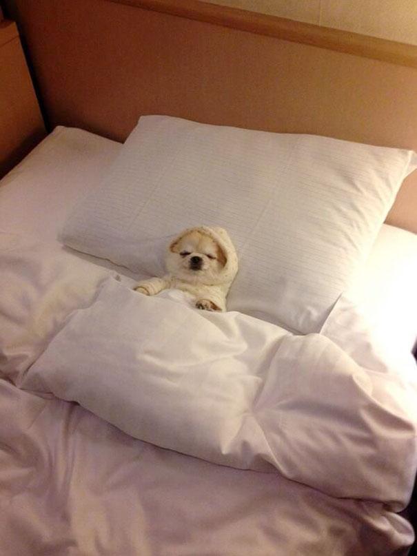foto-di-cani-che-dormono-nel-letto-dei-padroni-16