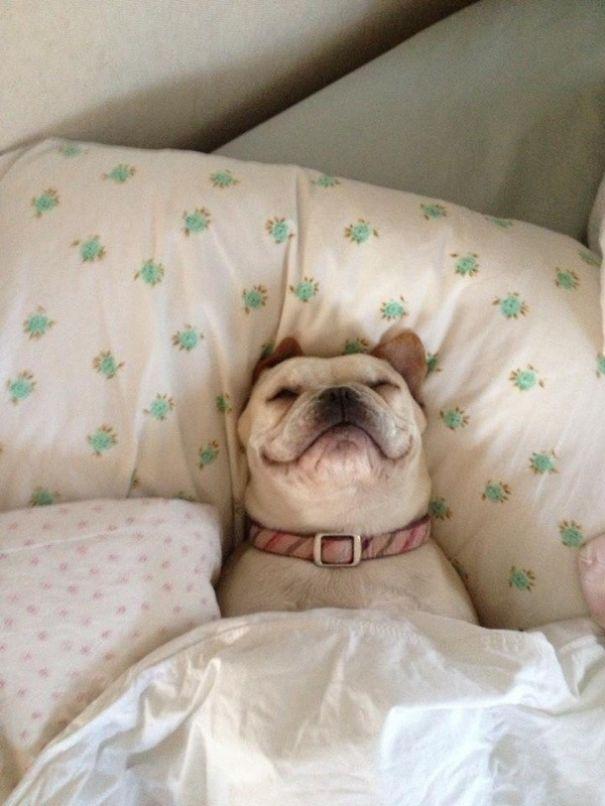 foto-di-cani-che-dormono-nel-letto-dei-padroni-19