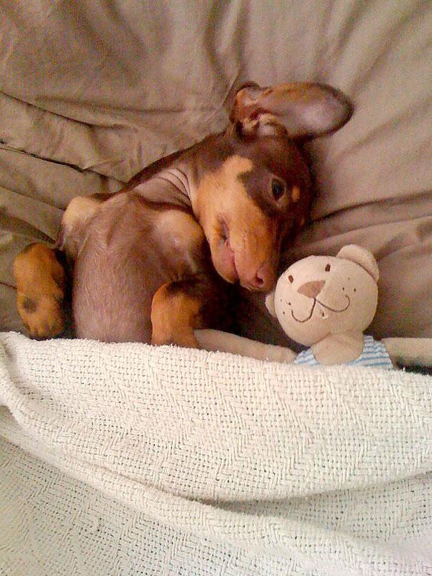 foto-di-cani-che-dormono-nel-letto-dei-padroni-26