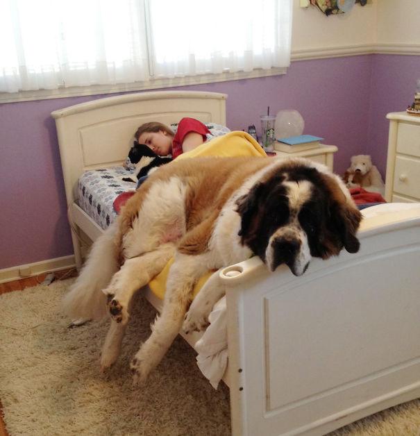 foto-di-cani-che-dormono-nel-letto-dei-padroni-28