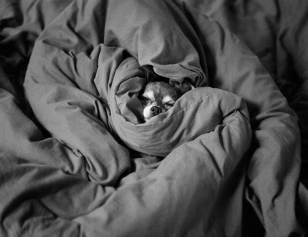foto-di-cani-che-dormono-nel-letto-dei-padroni-38