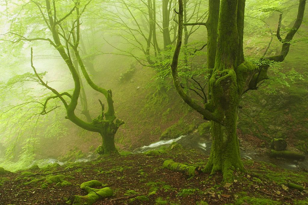 foto-foreste-mistiche-nebbia-oskar-zapirain-01