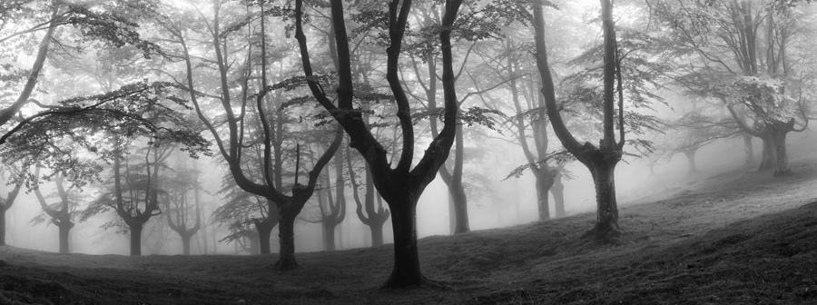 foto-foreste-mistiche-nebbia-oskar-zapirain-02