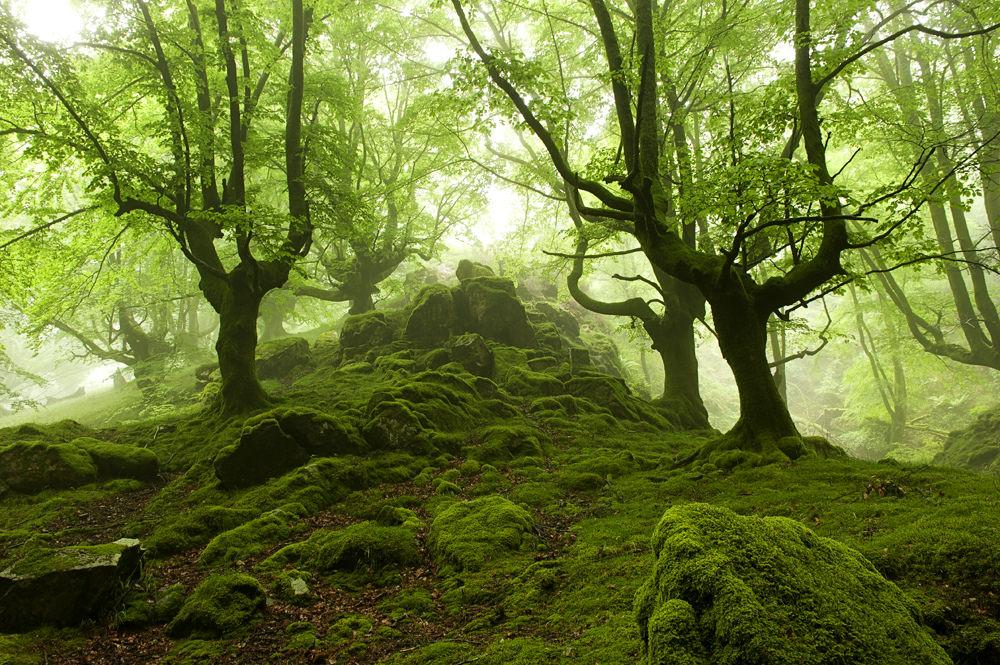 foto-foreste-mistiche-nebbia-oskar-zapirain-03