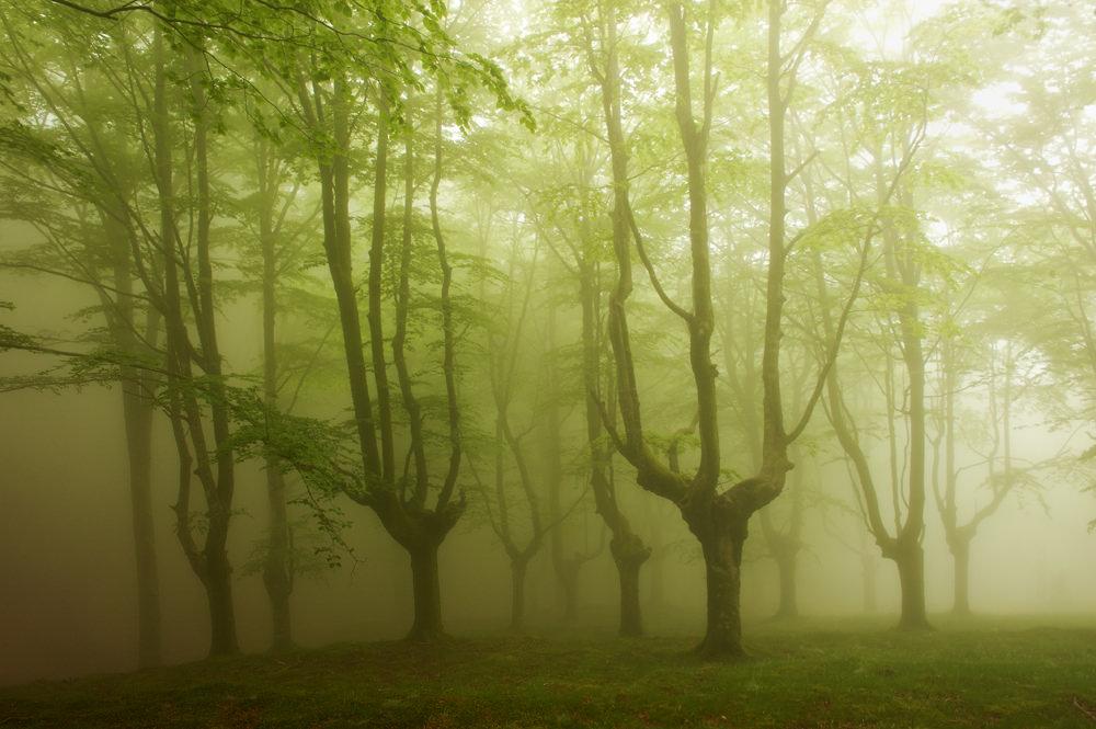 foto-foreste-mistiche-nebbia-oskar-zapirain-04