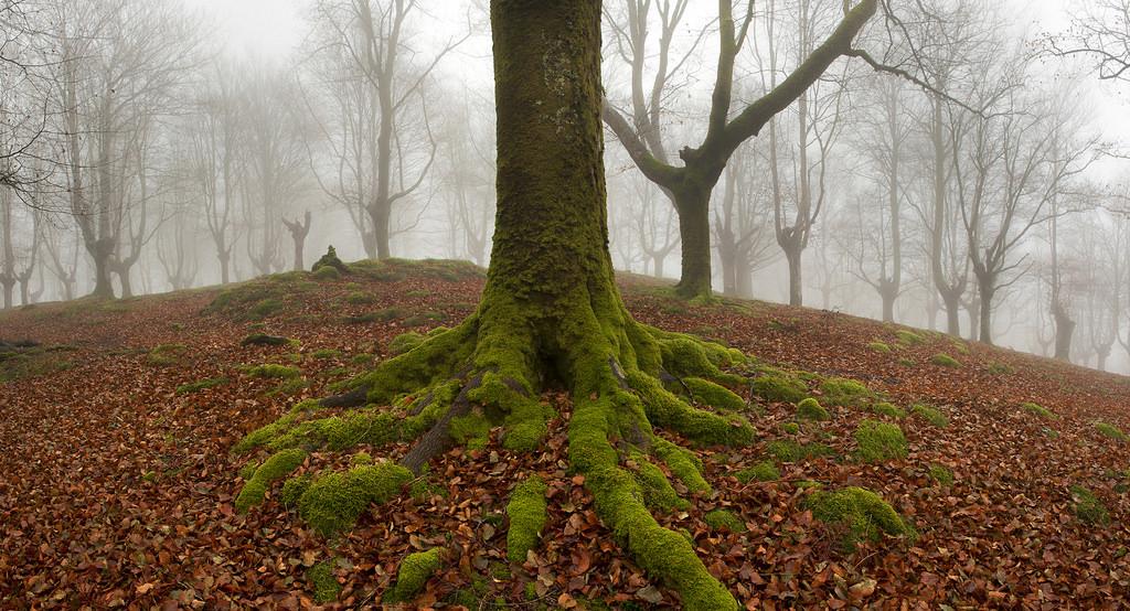foto-foreste-mistiche-nebbia-oskar-zapirain-05