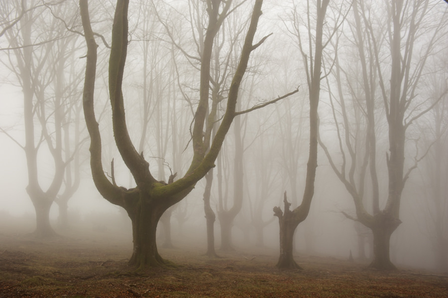 foto-foreste-mistiche-nebbia-oskar-zapirain-06