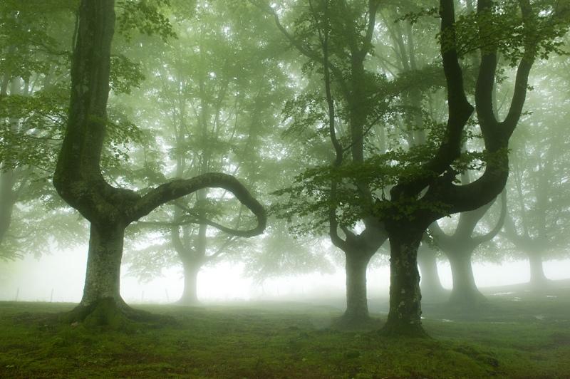 foto-foreste-mistiche-nebbia-oskar-zapirain-07
