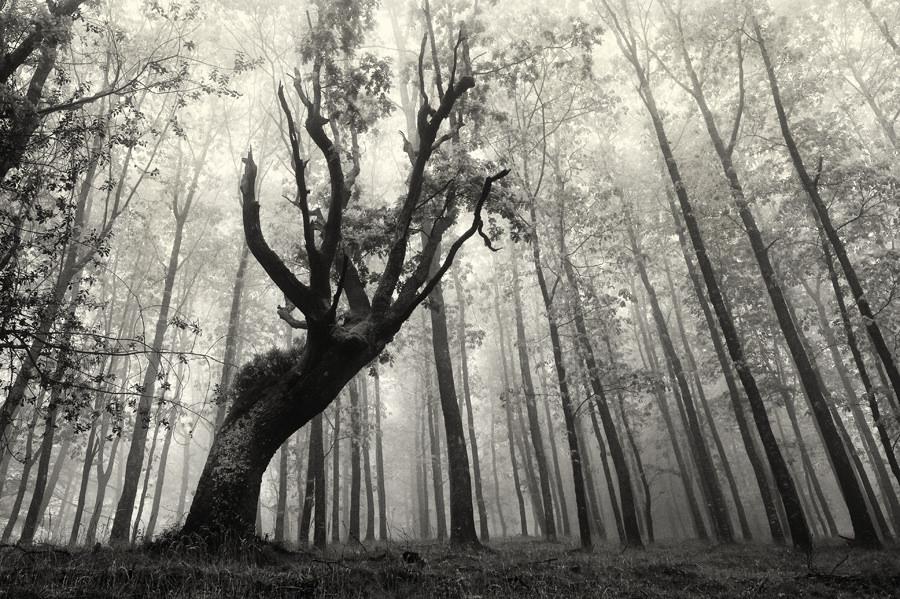 foto-foreste-mistiche-nebbia-oskar-zapirain-08