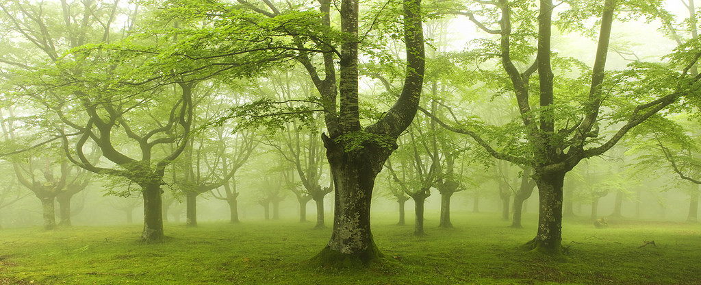 foto-foreste-mistiche-nebbia-oskar-zapirain-09