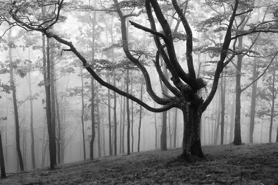 foto-foreste-mistiche-nebbia-oskar-zapirain-10