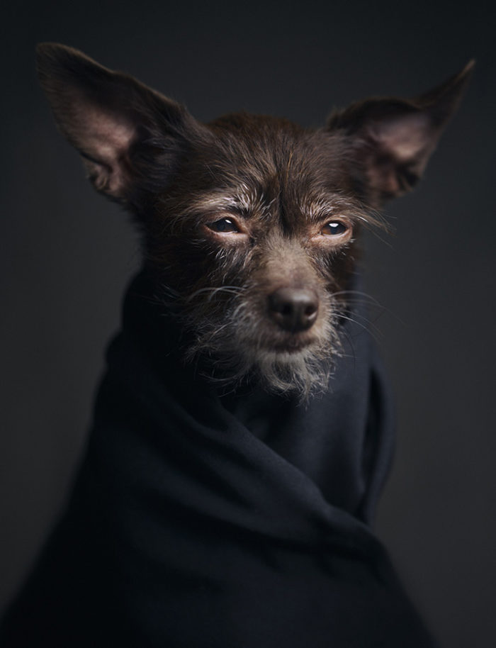 foto-ritratti-animali-espressivi-artistici-vincent-lagrange-01