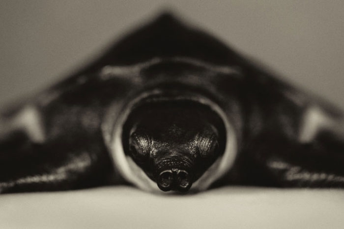 foto-ritratti-animali-espressivi-artistici-vincent-lagrange-04