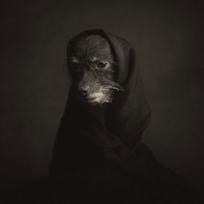 foto-ritratti-animali-espressivi-artistici-vincent-lagrange-06