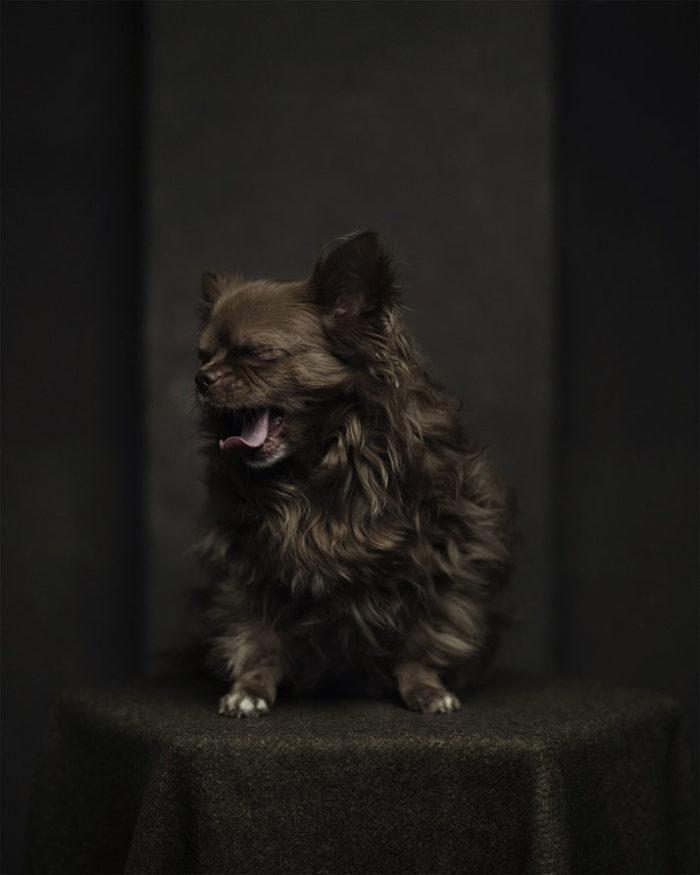 foto-ritratti-animali-espressivi-artistici-vincent-lagrange-09