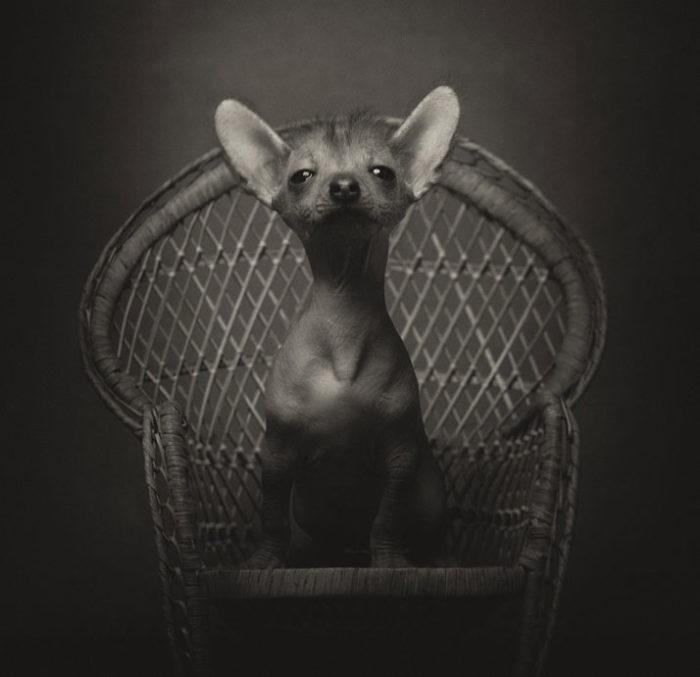 foto-ritratti-animali-espressivi-artistici-vincent-lagrange-10