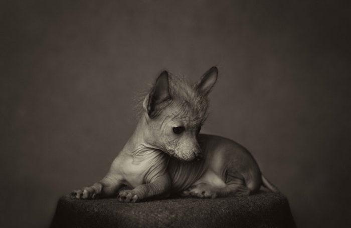 foto-ritratti-animali-espressivi-artistici-vincent-lagrange-11