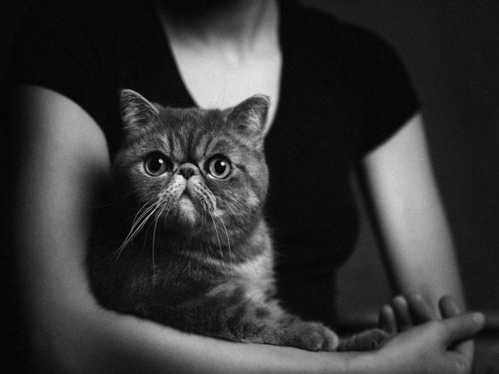foto-ritratti-animali-espressivi-artistici-vincent-lagrange-12