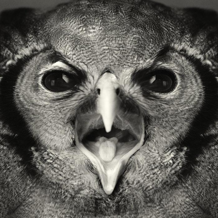 foto-ritratti-animali-espressivi-artistici-vincent-lagrange-13