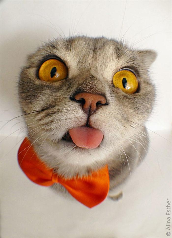 gatto-linguaccia-einstein-tira-fuori-lingua-melissa-1