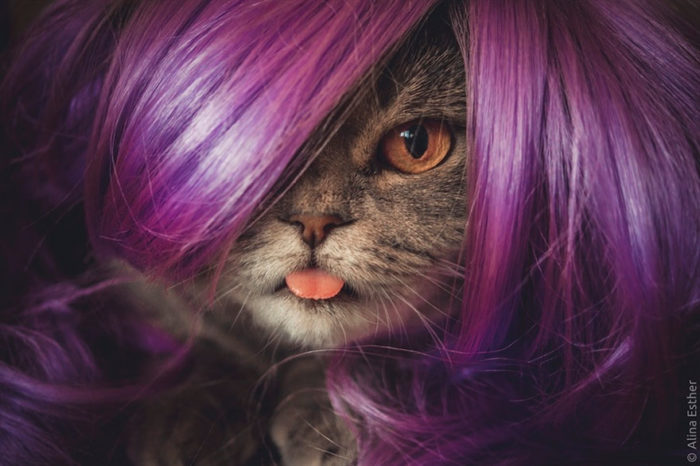 gatto-linguaccia-einstein-tira-fuori-lingua-melissa-3