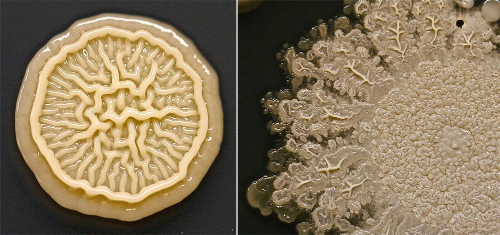 mani-microbi-batteri-bambini-giocano-tasha-sturm-1