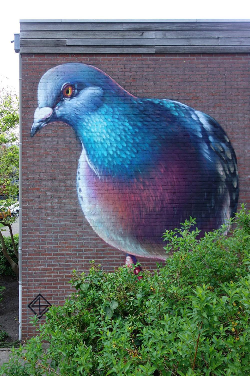murales-imponenti-maestoso-piccione-super-a-2