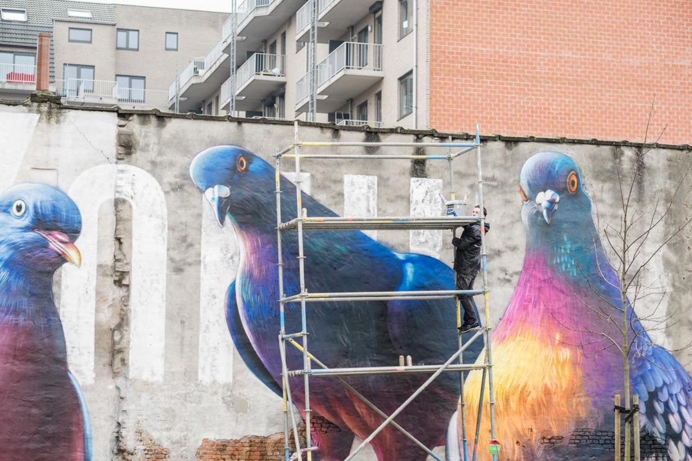 murales-imponenti-maestoso-piccione-super-a-4