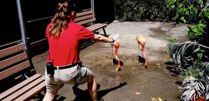 parodie-scena-jurassic-world-dinosauri-animali-zoo-10