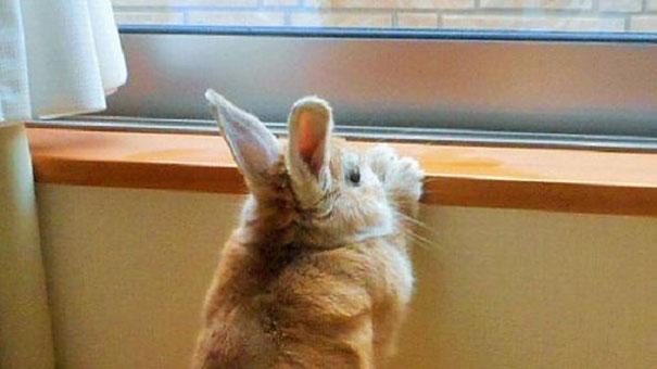 problemi-persone-basse-coniglio-koron-giappone-1