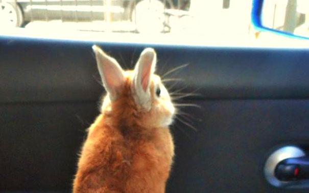 problemi-persone-basse-coniglio-koron-giappone-2