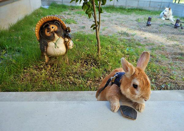 problemi-persone-basse-coniglio-koron-giappone-6