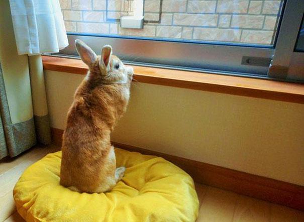 problemi-persone-basse-coniglio-koron-giappone-8