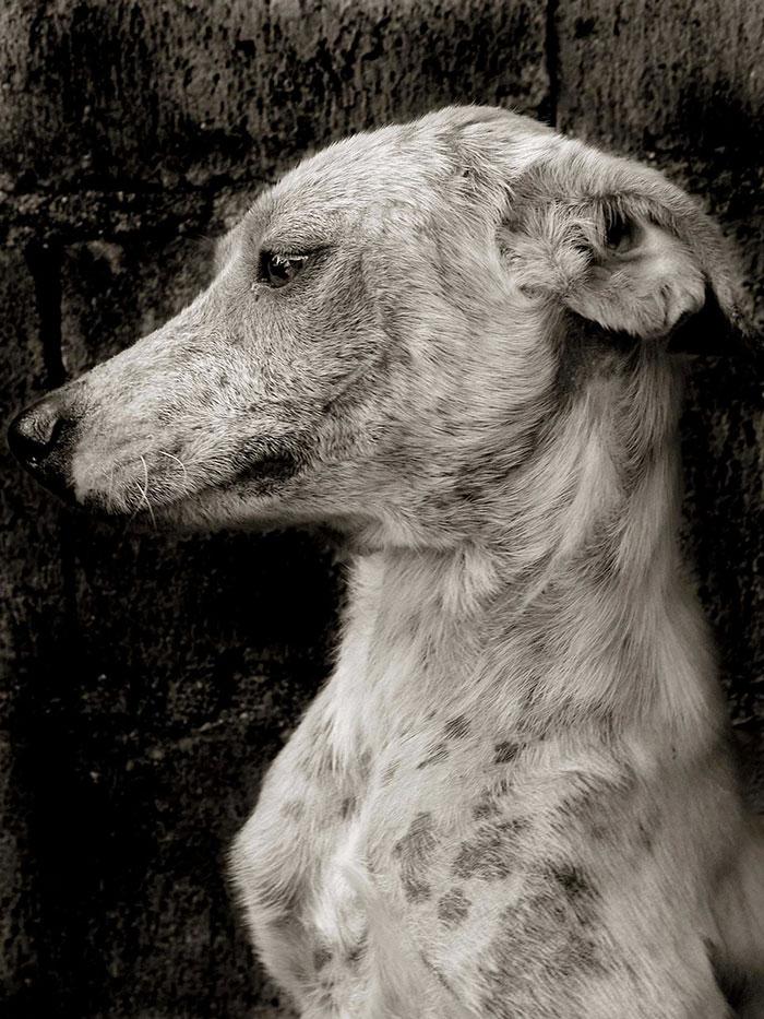 ritratti-foto-di-cani-randagi-abbandonati-traer-01