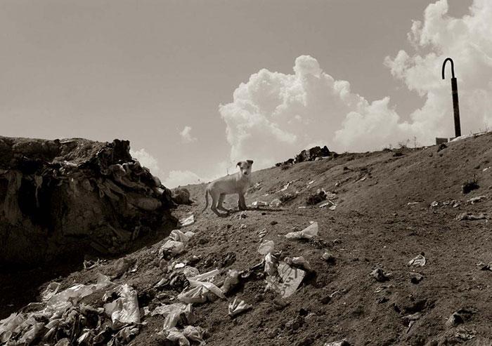 ritratti-foto-di-cani-randagi-abbandonati-traer-02