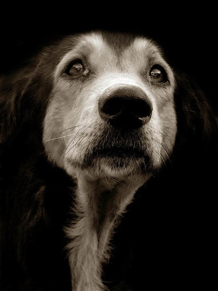 ritratti-foto-di-cani-randagi-abbandonati-traer-04